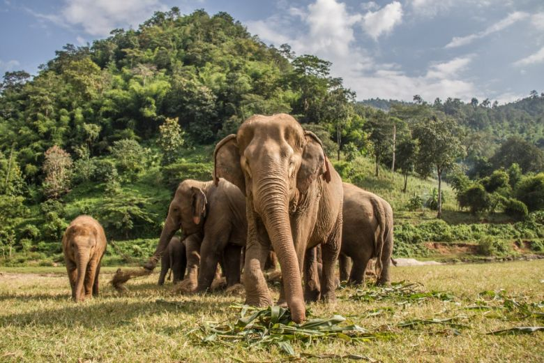 Elefántok. Fotó: shutterstock/Oriol Querol